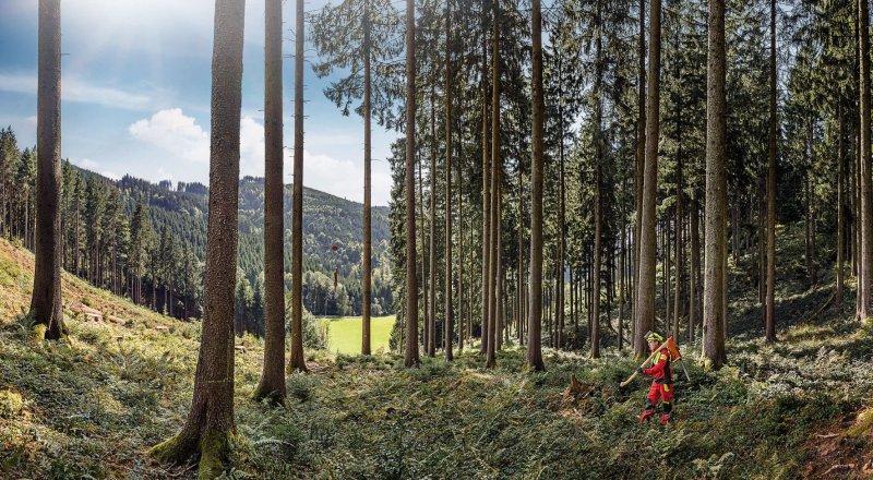 media/image/KUEBLER_FOREST_Messemotiv.jpg
